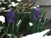 401714_snowmm02