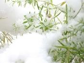 401714_snowmm03