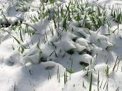 401714_snowmm04