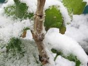 401714_snowmm05