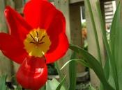 flowers08.jpg