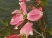 flowers20.jpg