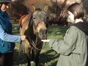 112416_Horses@Antioch01
