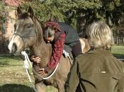 112416_Horses@Antioch02