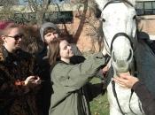 112416_Horses@Antioch06