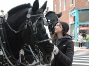 120116_horses03