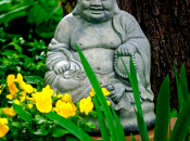 Budai's Belly