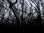 DarkForest1