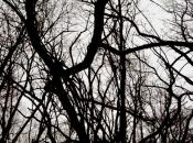 DarkForest2