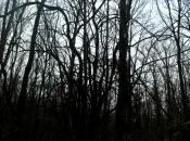 DarkForest3