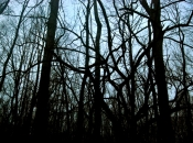 DarkForest7