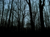 DarkForest8