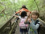 forest kindergarten 3