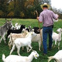 102711_goats02