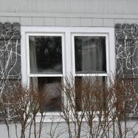 shutters08