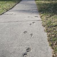 sidewalks_06
