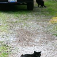 villagecats03