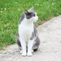 villagecats04
