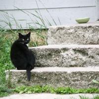 villagecats05
