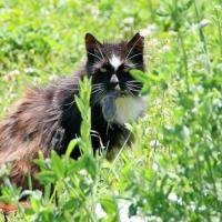 villagecats07