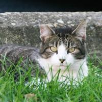 villagecats10