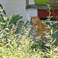 villagecats11