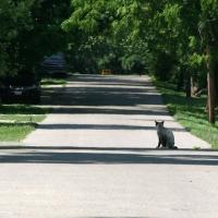 villagecats13
