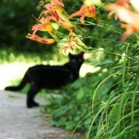 villagecats17