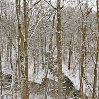 winterwalk_10