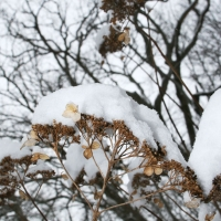 winterwalk_12