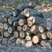 woodstockpile_02