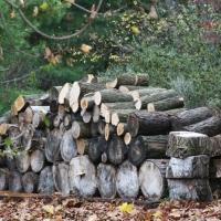woodstockpile_10