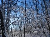 Snowfront