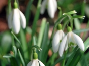 Springflwrs3.jpg