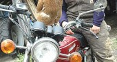 A layer hen perched on top of a motorcycle was not a strange sight at Amy Batchman's new Radical Roots Farm on West Jackson Road, where Batchman plans to grow perennials, teach mechanics courses for women and move old barns. (Photo by Megan Bachman)