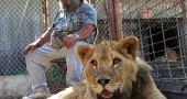 Exotic pet owner Terry Brumfield sat with his pet lions at home in Piketon, Ohio, in a scene captured by Springboro filmmaker Mike Webber for his award-winning documentary The Elephant in the Living Room. The filmmaker will introduce the film at the first showing of a run of sneak previews from Friday, Oct. 8–Thursday, Oct. 14, at the Little Art Theatre. (submitted photo)