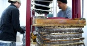Sam Burns and Chris Peifer press a stack of apple pulp into cider (photo by Aaron Zaremsky)