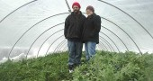 John DeWine and Michele Burns stood amongst the prolific kale of the wood-heated greenhouse at their Yellow Springs-Fairfield Road farmstead, Flying Mouse Farms. Their farm is the only source of local greens for direct purchase in the winter.