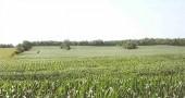 Mcnally farm