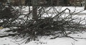 The Village will pick up branches from ice storm beginning Feb. 14. (Photo by Eliza Minde-Berman)