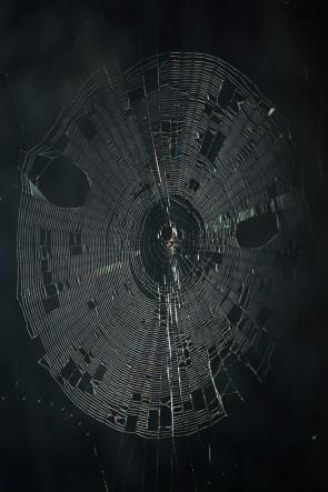 'World Wide Webs'