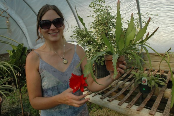 YS Botanicals partner Erin Currie showed off her blooming orchid cactus on a recent visit. (Photo by Megan Bachman)