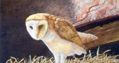 "Lehotsky's ""Barn owl"" in watercolor."