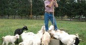 Local goatherd Owen Betts tended his flock at Whitehall Farm this month. Antioch College recently hired Betts' goats to chew through the overgrown weeds at its farm to make way for a food forest. The goat mowing service is available to anyone with a weed problem. (Photo by Megan Bachman)