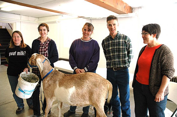 Area goat farmers, from left, Caroline Mullin, Abby Dant, Jill Dant and Owen Betts, pictured here with the Dant's goat Sampson, gave a workshop on raising the ruminant  last weekend as part of New Liberty Farms winter workshop series. Beth Bridgeman, on right, is organizing the food and farming series from her new post at the farm, located north of Yellow Springs. (Photo by Megan Bachman)