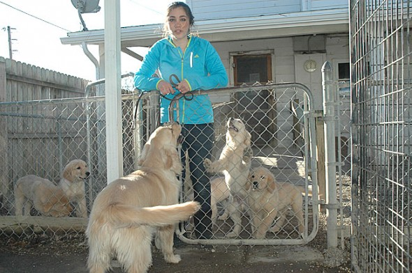 Israeli resident Yarden Oron came to the village last month to learn how to train the seizure alert dogs that help especially kids with epilepsy. She now works with Veera, above, at 4 Paws for Ability in Xenia, and regularly visits the golden retriever puppies who are raised there as future service dogs. (Photo by Lauren Heaton)