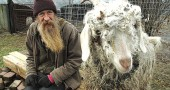 Nick Ormes cares for abandoned and neglected animals at the Ranch Menagerie Animal Sactuary on Village-owned property on US 68. He's hoping to raise more money to feed his 73 animals through the winter and to raise awarness about the epidemic of stray, abandoned, neglected and abused animals. (Photo by Megan Bachman)