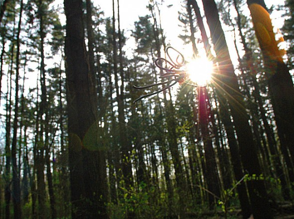 """A pine forest faerie glimmered in the evening light before calling the recent glut of neopagan worship """"def annoying."""""""