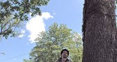 Nick Boutis, director of Glen Helen, last week identified some of the ash trees downtown, including this large ash outside the Jackson Lytle and Lewis Funeral Home on Xenia Avenue. The trees are at risk from the Emerald Ash Borer, and experts believe that if the insects  — which have killed millions of trees in Michigan and Ohio — aren't already in the village, they will be soon. (Photo by Diane Chiddister)