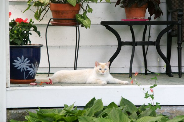 A Livermore Street cat staring me down. (photos by Suzanne Ehalt)